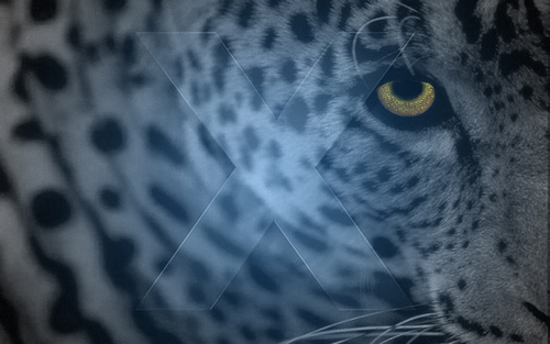 4-leopard_wallpaper.jpg