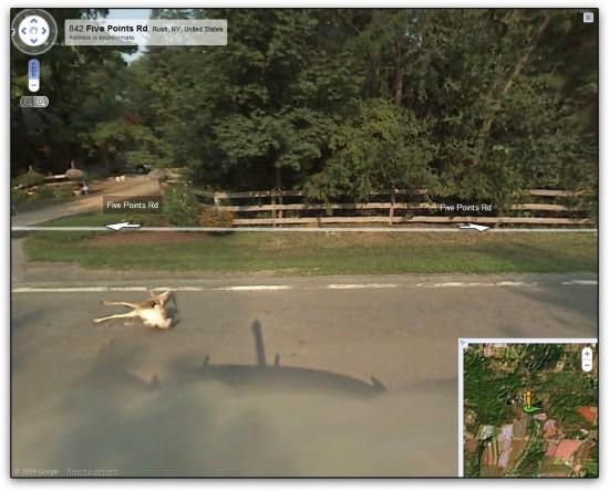 Veado atropelado pelo Google Street View