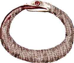 25-tpb-cobra