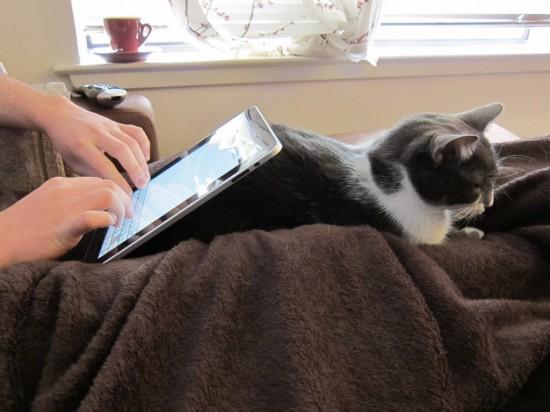 Gato de apoio para iPad