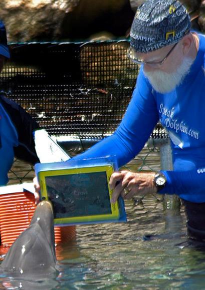 iPad e golfinho