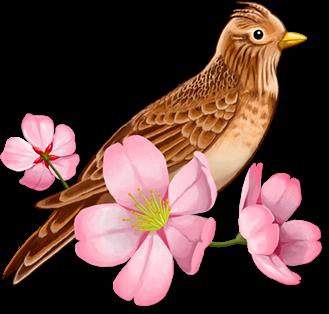 Logo do Hibari