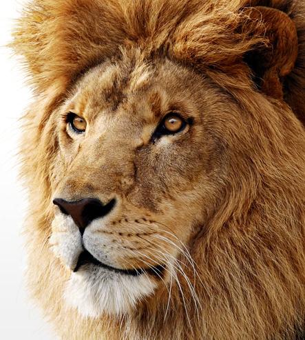 Close no leão do Mac OS X 10.7 Lion