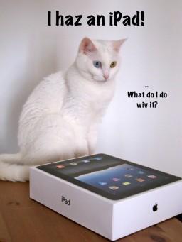 LOLcat e iPad
