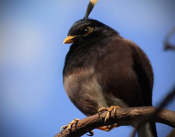 Angry Bird na vida real