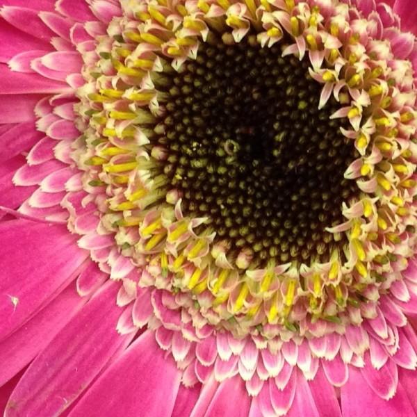 Fotografia de uma flor - iPhone 4S