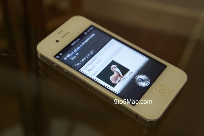 Siri e doninha num iPhone 4