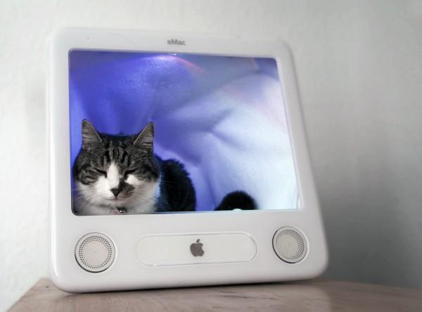 Gatinho num eMac - eSleeper