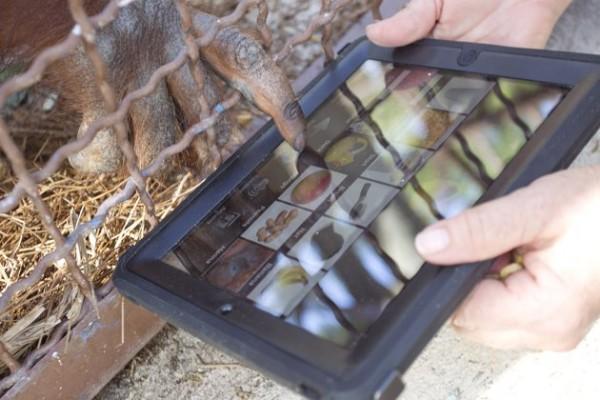 Orangotango usando um iPad