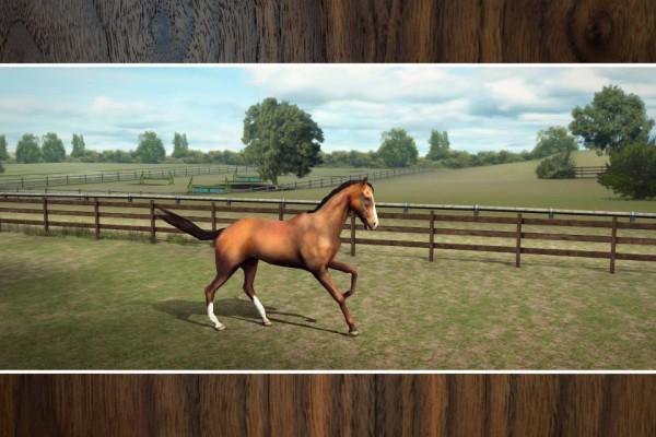 My Horse - iPhone