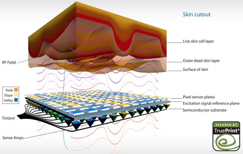 Diagrama da pele
