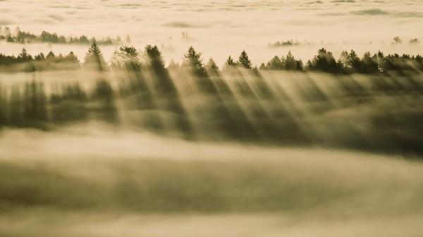 Wallpaper OS X Mavericks - Foggy Forest