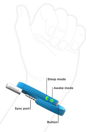 Anatomia da UP