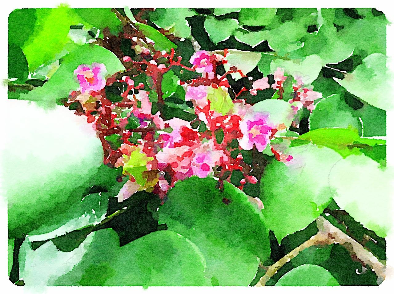 Flores de Carambola