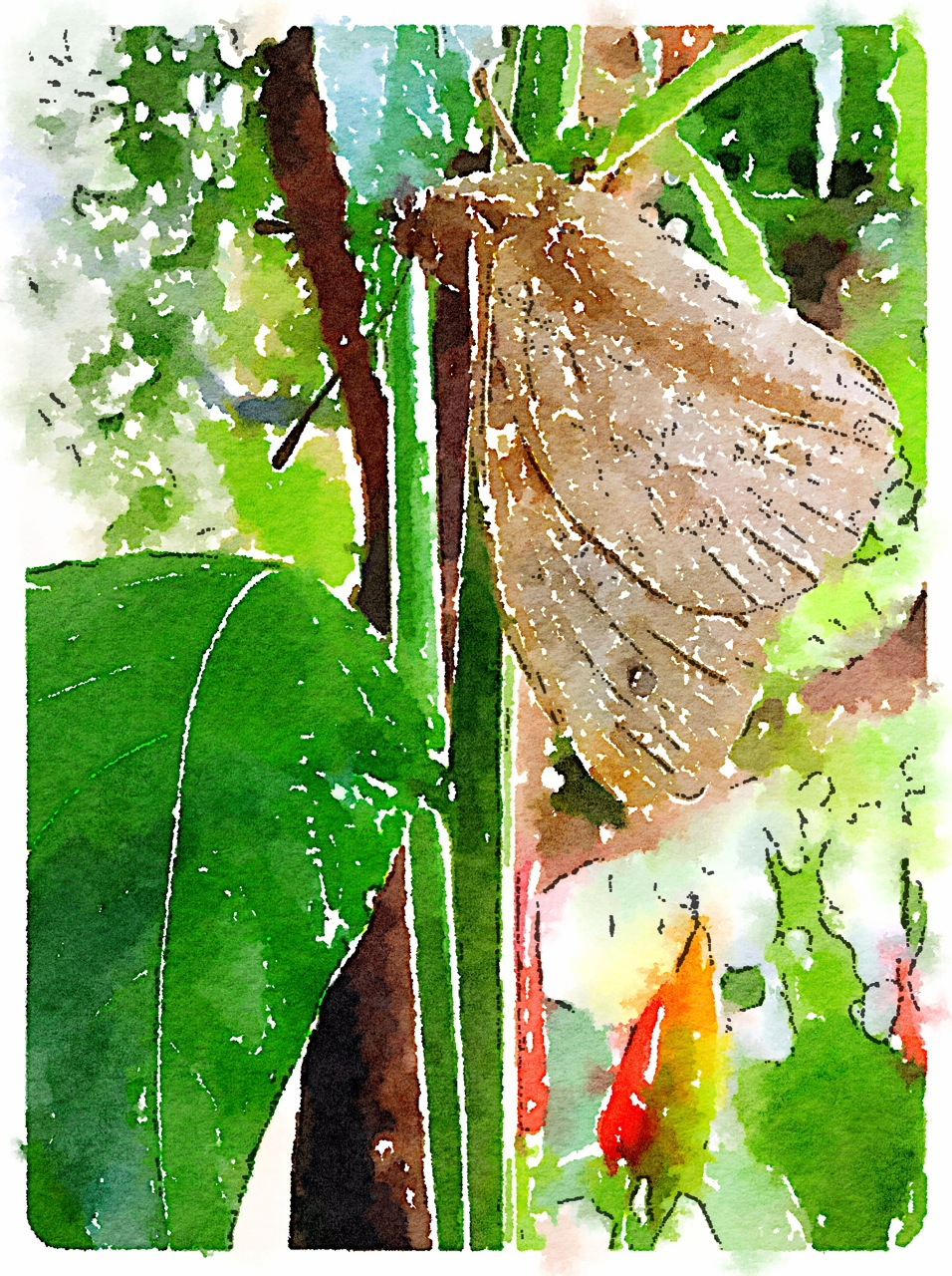 Mariposa com filtro Illustration