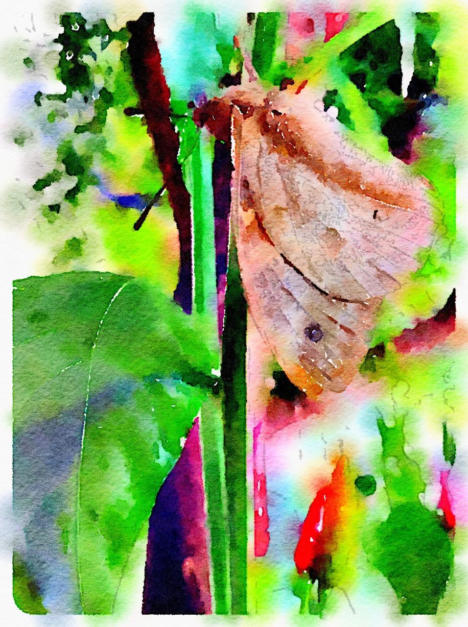 Mariposa com filtro Bold