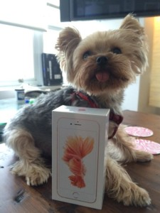 iPhone 6s de moça com cachorrinho