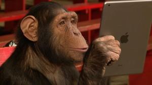 Chipanzé com iPad