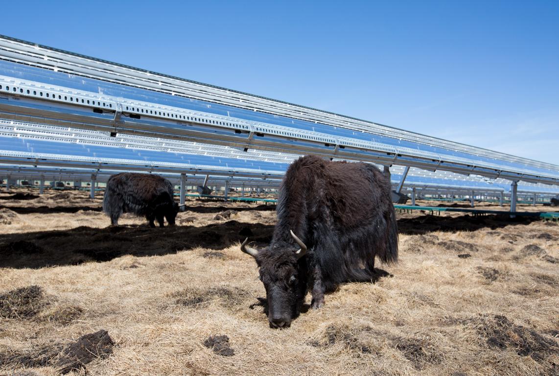 Fazenda solar de parceira da Apple na China