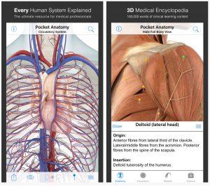 Pocket Anatomy