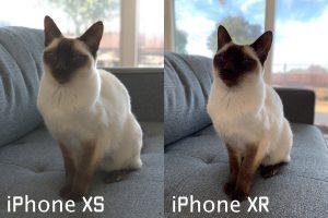 Modo Retrato em animais no iPhone XR