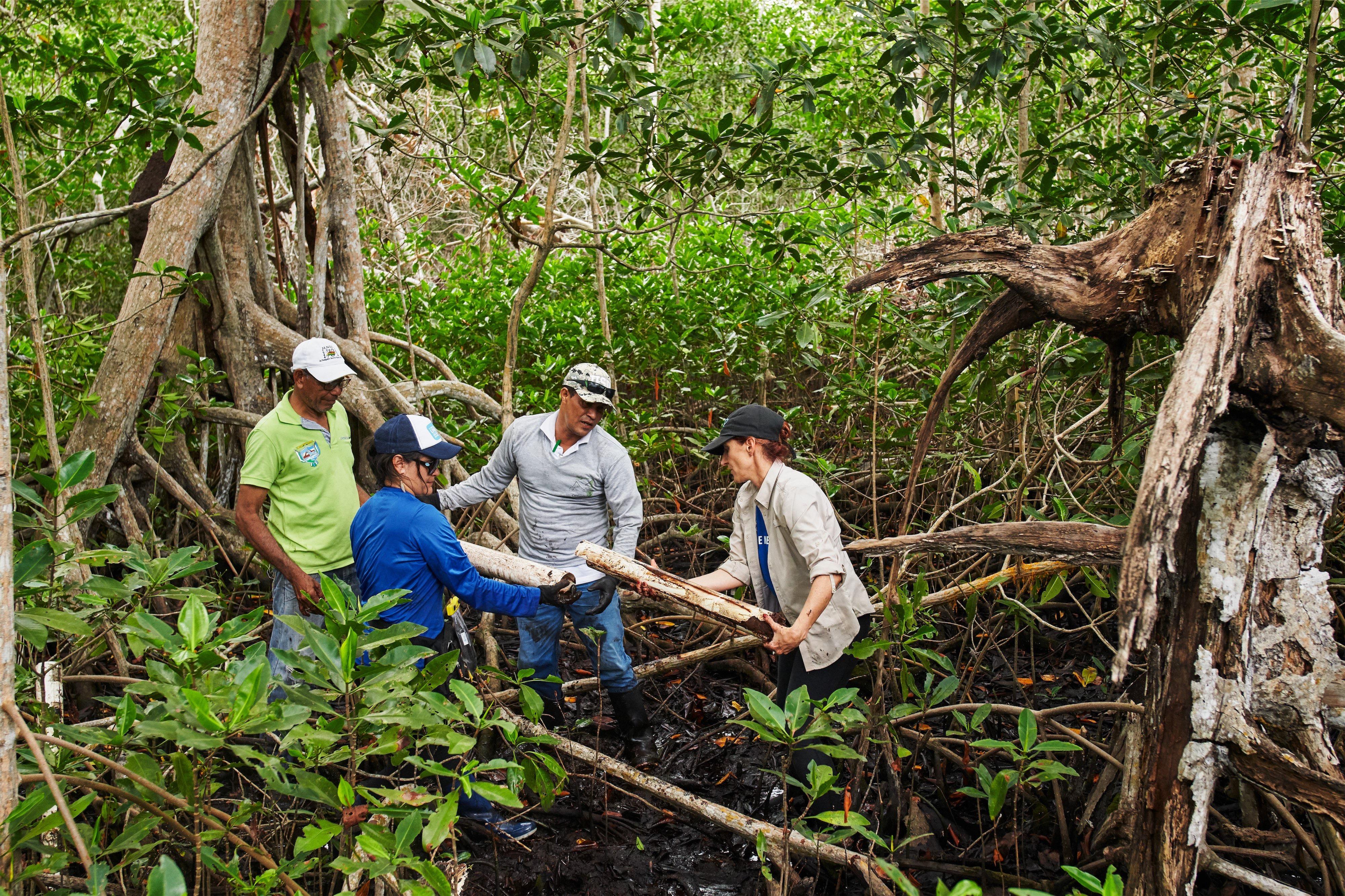 Iniciativas de conservação de manguezais na Colômbia apoiadas pela Apple