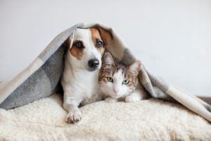 Cão/cachorro e gato na cama