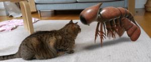 Ferramenta de animais 3D do Google